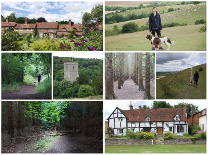 Country Walk B