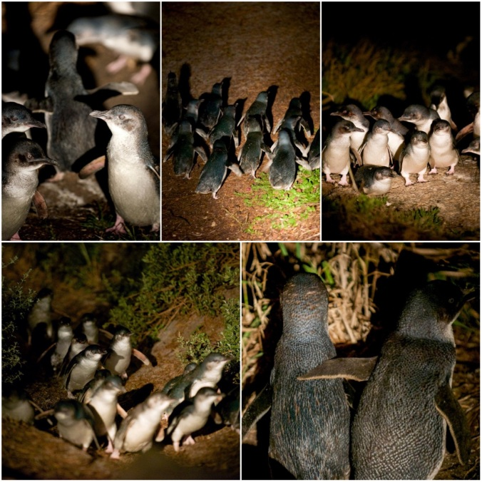 penguinsFINAL