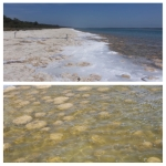 Thrombolites at Lake Clifton - ancient life forms that can only be seen a few places on earth