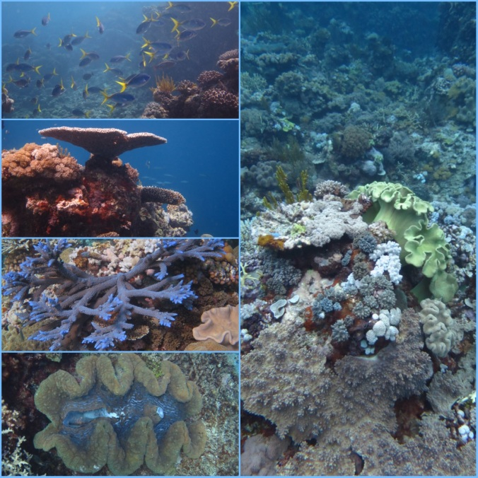 Coral2FINAL