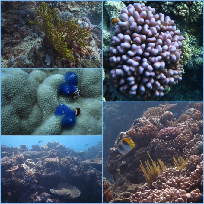 CoralFINAL