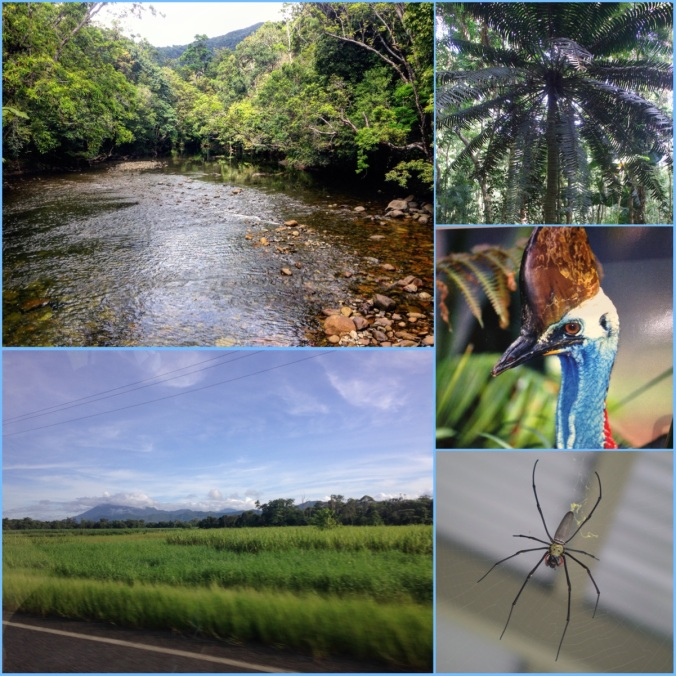 Daintree2FINAL