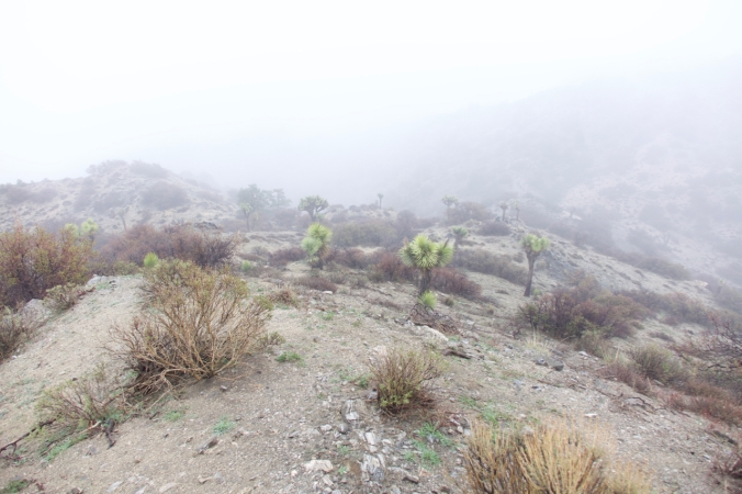 hiking-1-1