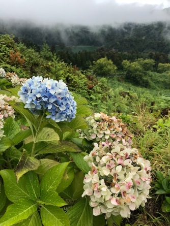 Azores_Flora - 1